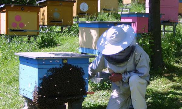 Ekodebata Pszczoła w środowisku
