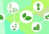 Bezpieczeństwo żywnościowe i Biogospodarka