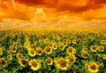 Nowoczesne, zrównoważone rolnictwo