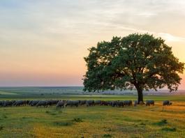 Małopolska biogospodarka