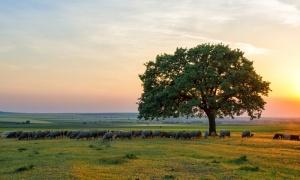 Małopolska biogospodarka – po stronie szans czy zagrożeń? @ Uniwersytet Rolniczy w Krakowie | Kraków | małopolskie | Polska
